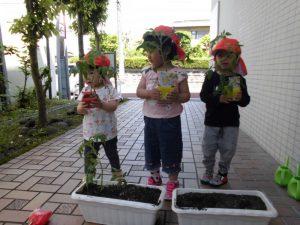 【小規模保育園:小田原園】ミニトマトの栽培